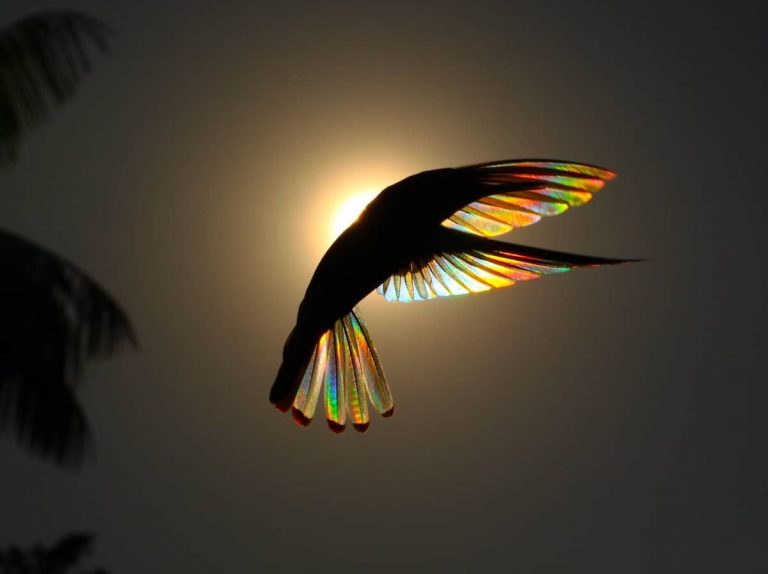 A Rainbow of Light Diffracts Through Hummingbird Wings in Photographs by Christian Spencer