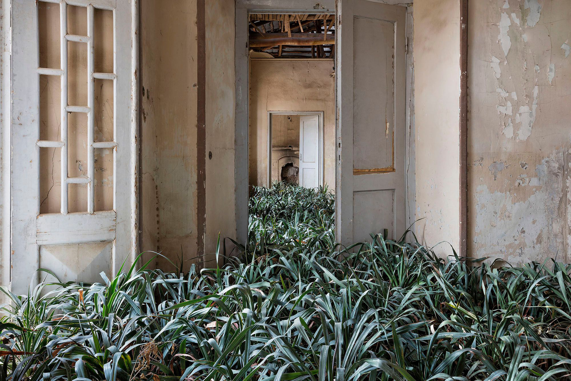 Nature Thrives in Tehran's Abandoned Courtyards, Staircases, and Bedrooms in a Photo Series by Gohar Dashti