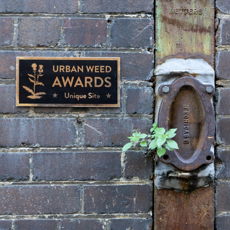 Urban Weed Awards Crown Unwanted Plants with Superlatives