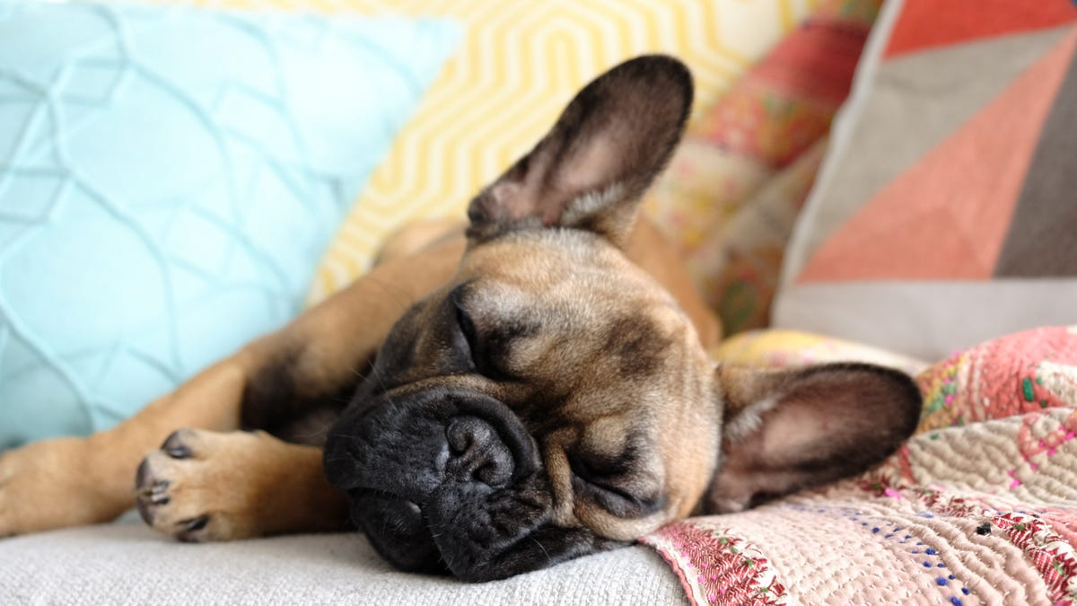 Spring cleaning? Here's 5 ways to get rid of stubborn pet hair